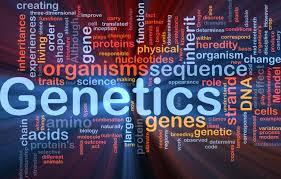 Functional Epigenetics